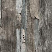 Wood (98)